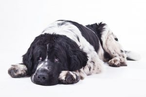 10 ways to help an arthritic pet