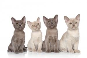 veterinarians suggestions