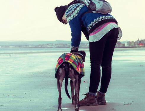 walk with dogs-Pet health animal hospital
