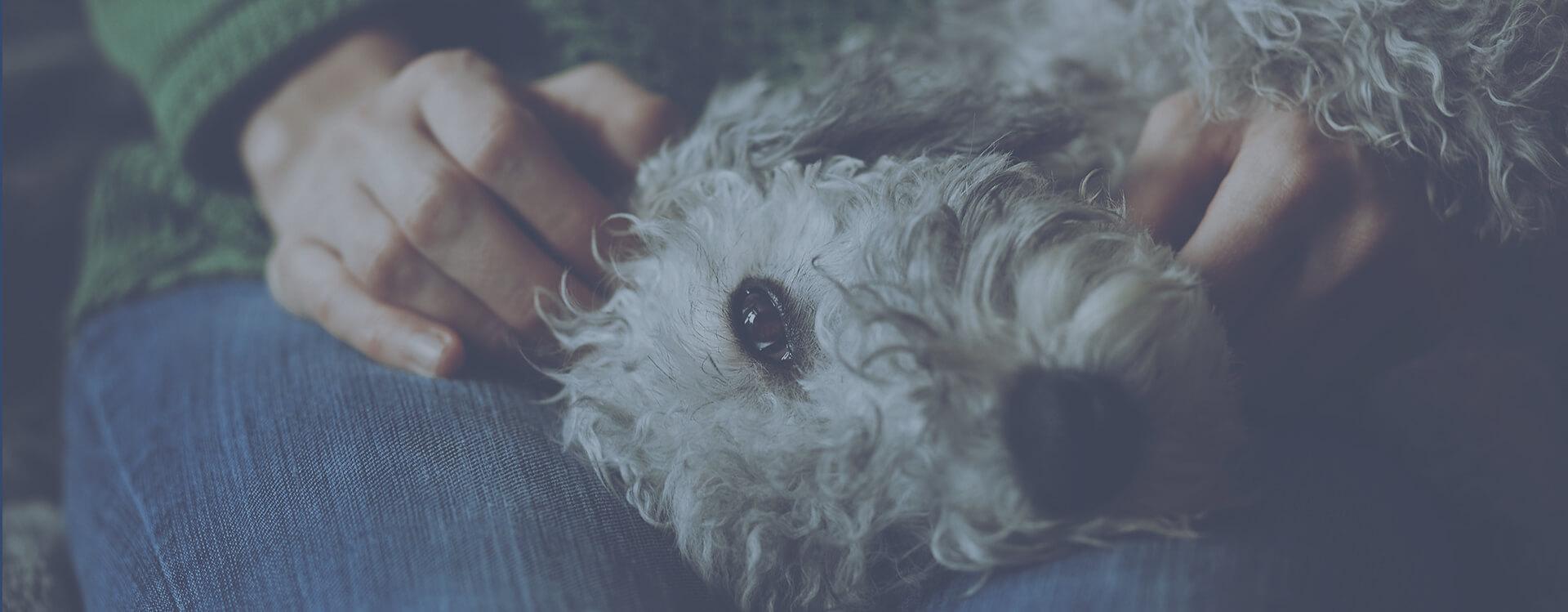 Contact Pet Health