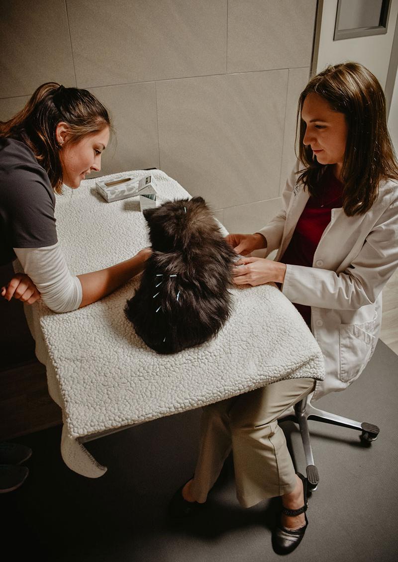 Pet Health Animal Hospital Acupuncture 2