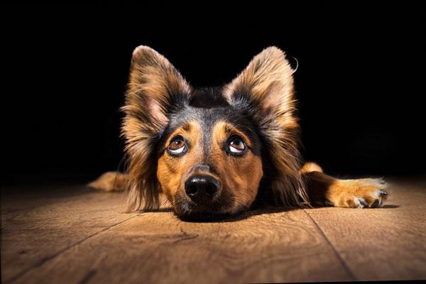 dog vaccinations in Pethealthhospital