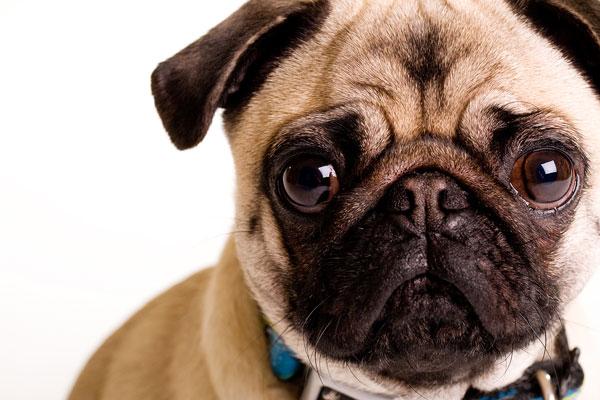 dog surgery treatments in Pethealthhospital