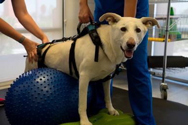 canine rehabilitation 2