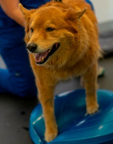 canine rehabilitation 3