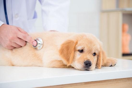 Veterinary Care -pet health animal hospital