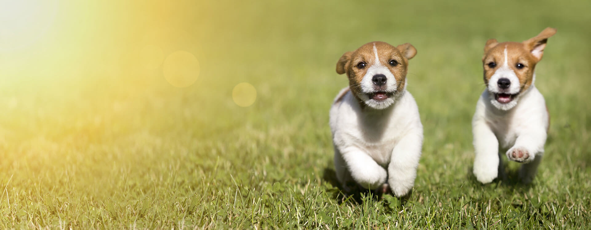 dog vaccinations -pet health