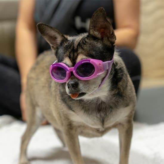 Canine Rehabilitation 6