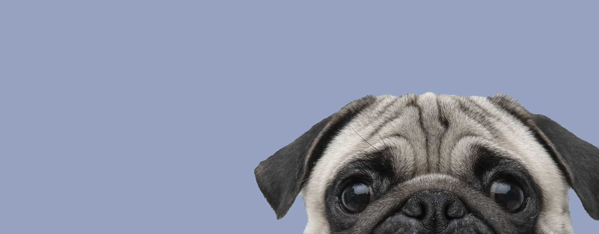 homeopathic veterinarian-pethealth