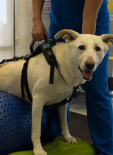 Canine Rehabilitation Landing 6