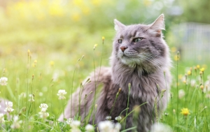 cat-pet-health-hospital