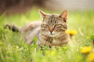 cat -pet-health-hospital2