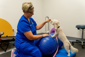 canine rehabilitation specialist during the work